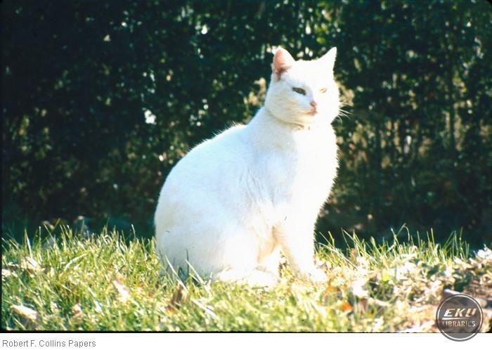 1990a005-002-13.jpg