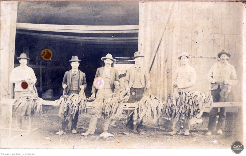 Unidentified Men Stripping Tobacco