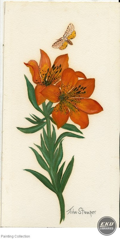 Tiger Lilly