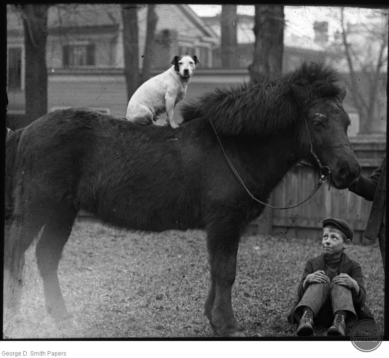 Unknown boy with dog and pony