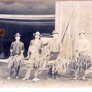 Unidentified Men Stripping Tobacco